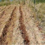 Due nuovi metodi di coltivazione dei legumi