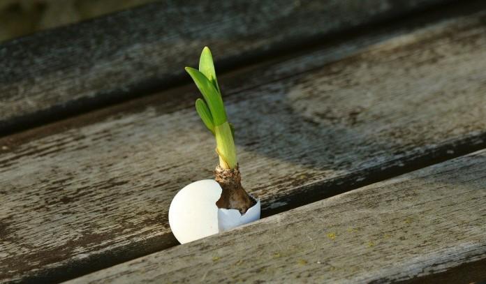 uovo nel terreno concime