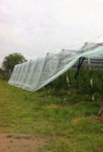rete anti insetto